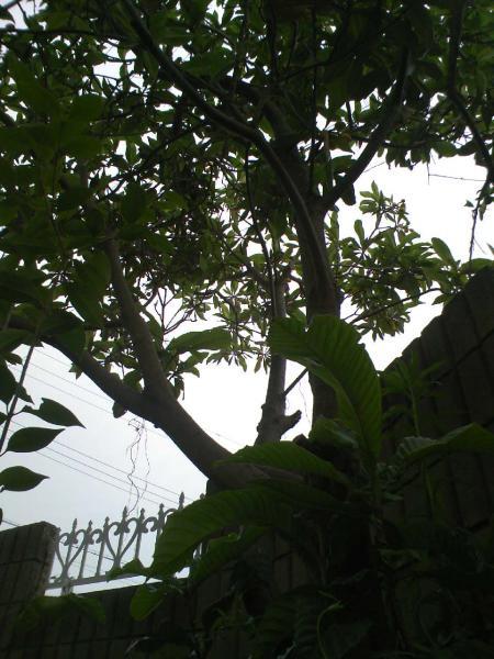 DCF_0269_convert_20090523220759.jpg