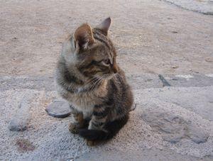 広場のネコ