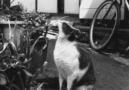 enoshima_cat08.jpg