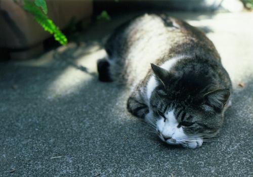enoshima_cat09.jpg
