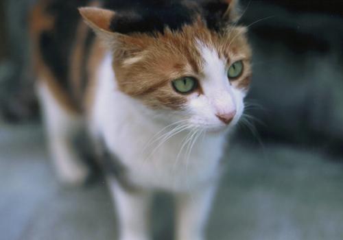 enoshima_cat10.jpg