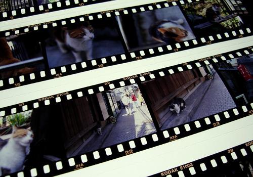 enosima-film.jpg