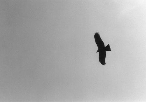 enosima_bird01.jpg