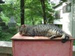 のんびりネコさん