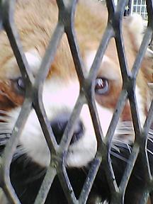 動物その2