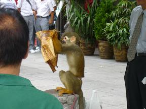 南京町のお猿さん