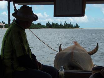 水牛車に乗って由布島へ!
