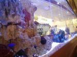 水槽のあるイタリアンレストラン