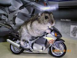 bikemo.jpg