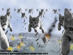 warcat.jpg