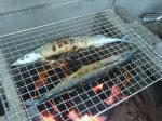 第2回秋刀魚祭り
