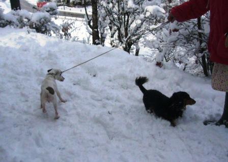 yuki-snow.jpg