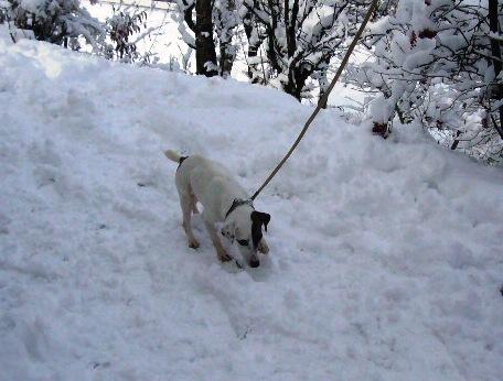 yuki-snow2.jpg