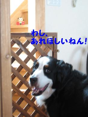 IMG_0555-1.jpg