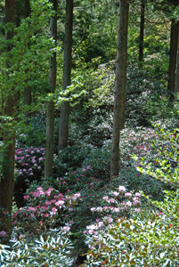 岳人の森6
