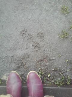 春の足跡・・