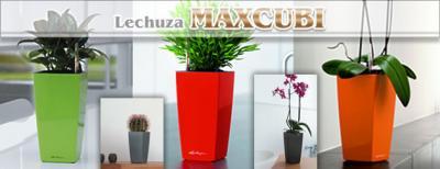 maxcubi-630_convert_20090702215858.jpg