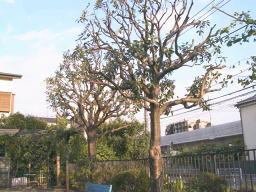 donguri050927