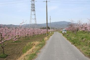 豊田市 猿投地区 桃畑