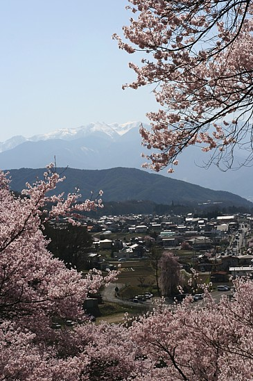 高遠城址公園 桜と木曽駒