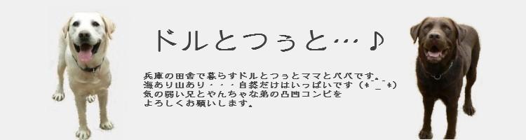 ドルとつぅと・・・♪