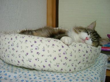 も、寝る。
