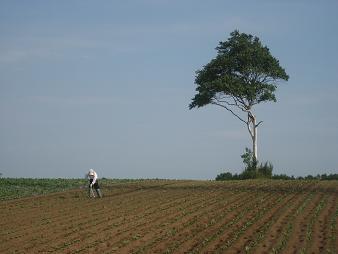 北広島市・輪厚の農地