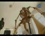 博物館で人の骨格標本を見ていると・・・・