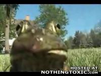 ミャーーーーーとネコのような声で鳴く蛙