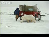 白クマに襲われる映像