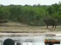 ジャガーがカピバラを襲う瞬間映像