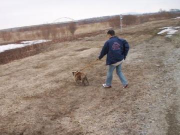 犬に散歩されてるとーちゃん