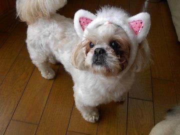 モデル犬 健太 ドルガバ専属(ドルがガバガバ入ってくる)