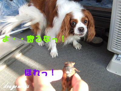 DSCF7698.jpg