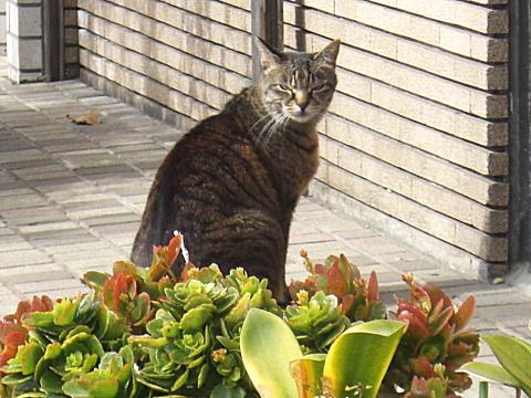 東向島の猫②