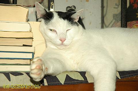 ヅラ猫先生②