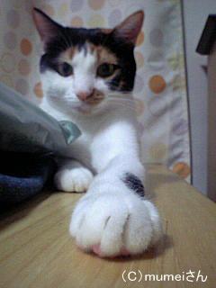 おかっぱヅラ猫 らんちゃん④