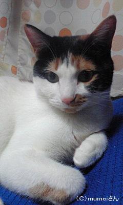 おかっぱヅラ猫 らんちゃん②