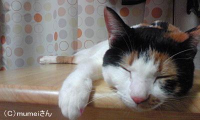 おかっぱヅラ猫 らんちゃん⑤