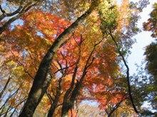 九州中央山地の魅力2