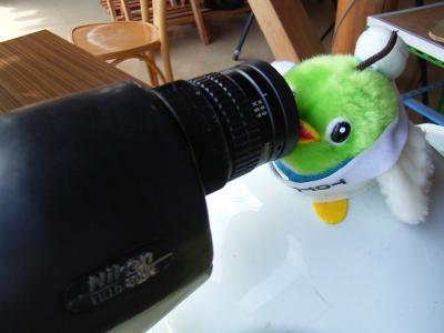 鳥さん、こんにちは~!
