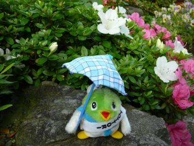 酸性雨って知ってる?