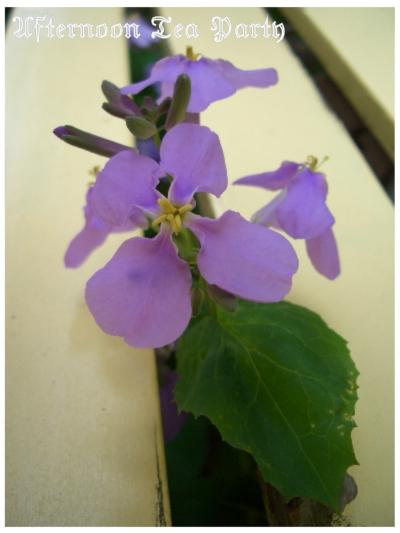 ガーデニング 紫花菜 ベンチ
