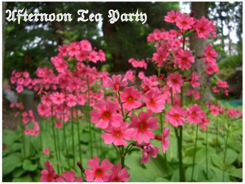 ガーデニング 濃いピンクの花 新潟 全体