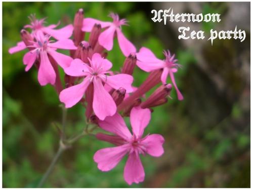 ガーデニング ピンクの花 新潟