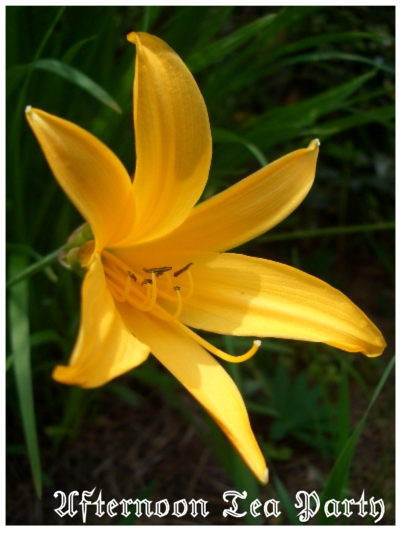 ガーデニング 黄色の花 新潟 一つ
