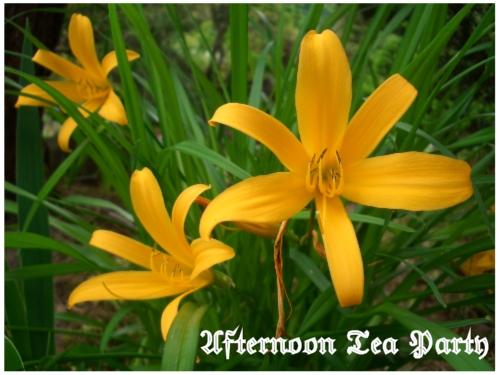 ガーデニング 黄色の花 新潟 全体