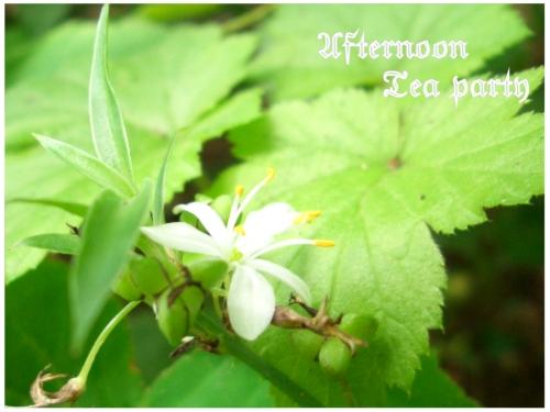ガーデニング オリヅルラン 花