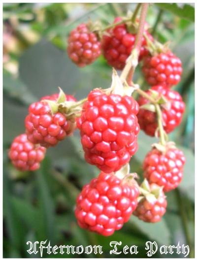 ガーデニング ブラックベリー 赤い実