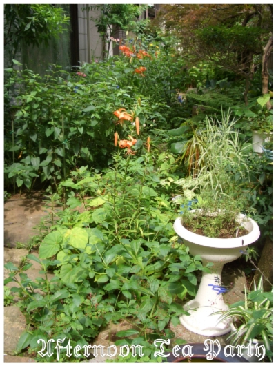 ガーデニング 夏の庭 全体